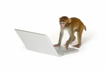 Monkey on a laptop