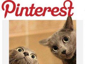 pinterest-cats